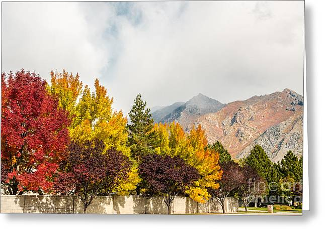 Sue Smith Greeting Cards - Autumn in the City Greeting Card by Sue Smith