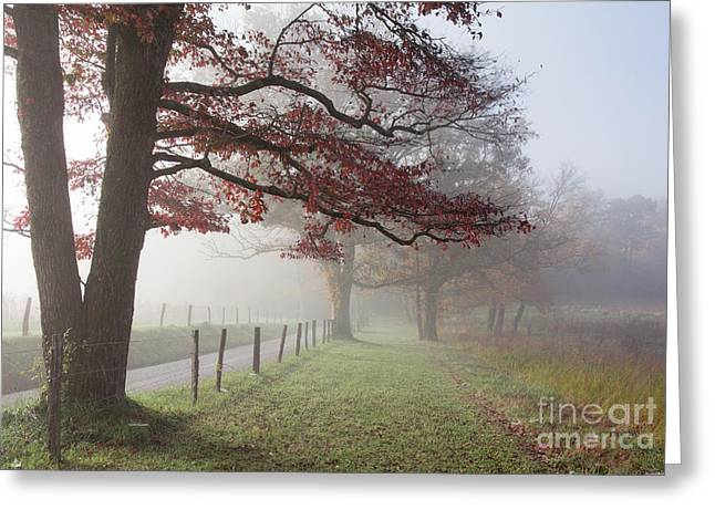 Douglas Stucky Greeting Cards - Autumn In The Cove III Greeting Card by Douglas Stucky