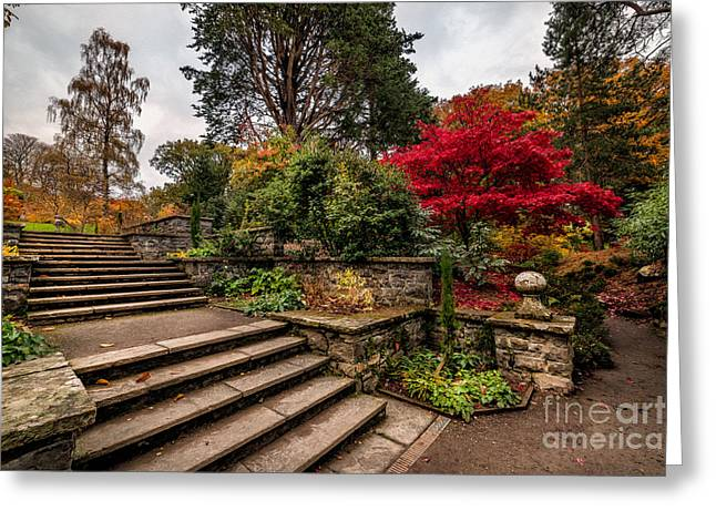 Acer Greeting Cards - Autumn in the Garden Greeting Card by Adrian Evans