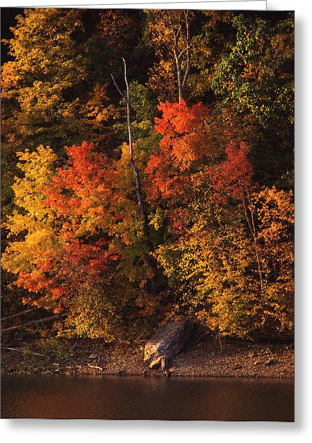 Cabelas Greeting Cards - Autumn in the Ozarks Greeting Card by Greg Kopriva