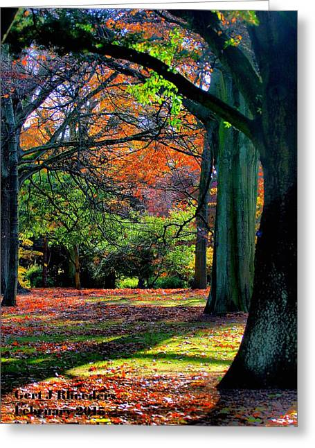 Commercial Photography Paintings Greeting Cards - Autumn in the Park V a Greeting Card by Gert J Rheeders