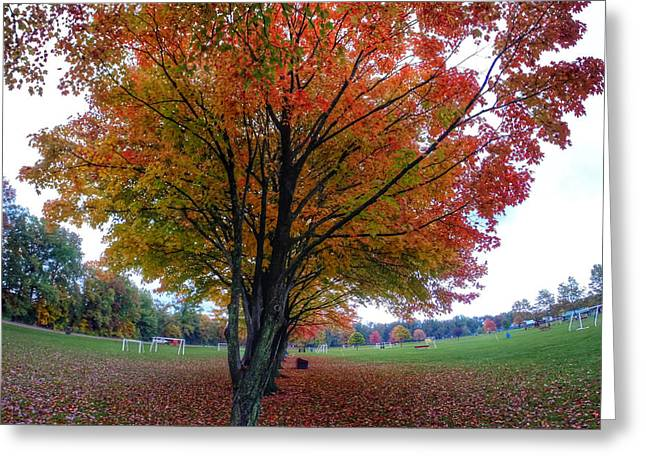 Go Pro Greeting Cards - Autumn in the Park Greeting Card by J Pearson  Photos