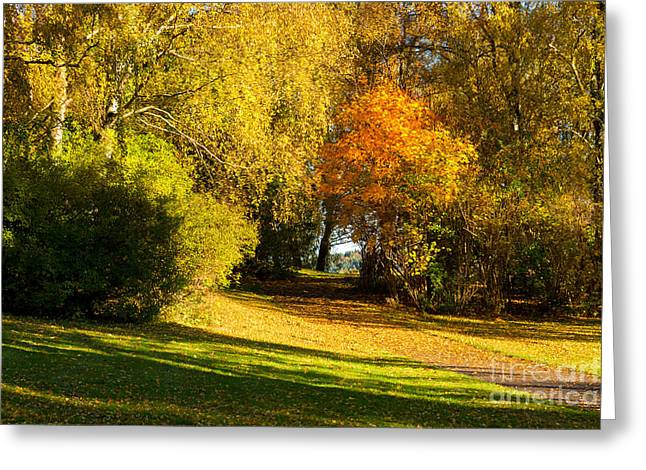 Late-summer Greeting Cards - Autumn in the Park Greeting Card by Lutz Baar