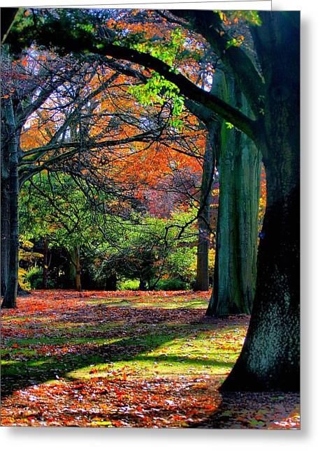 Commercial Photography Paintings Greeting Cards - Autumn in the Park V b Greeting Card by Gert J Rheeders
