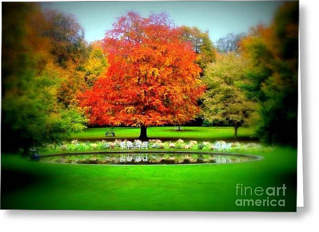 Water Garden Pyrography Greeting Cards - Autumn in the Phoenix Park Greeting Card by Ilona Asaciova