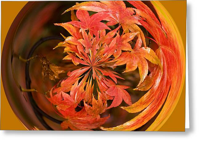 Process Greeting Cards - Autumn in the Round Greeting Card by Anne Gilbert