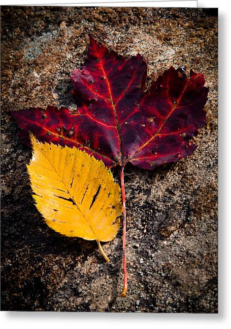 Leaves Digital Art Greeting Cards - Autumn in the Spotlight Greeting Card by David Patterson