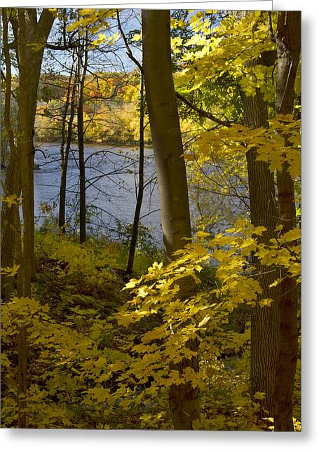 Fall Trees Pyrography Greeting Cards - Autumn in the St Croix River Valley Greeting Card by Garry McMichael