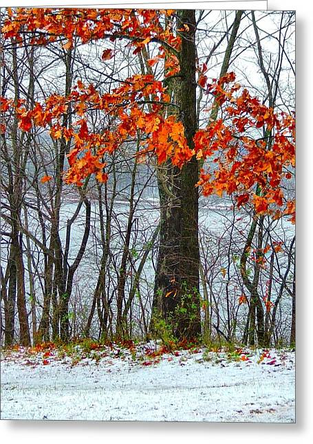 Julie Dant Greeting Cards - Autumn in Winter Greeting Card by Julie Dant