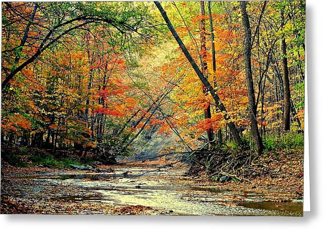 Naturaleza Greeting Cards - Autumn in Wonderland Greeting Card by Frozen in Time Fine Art Photography