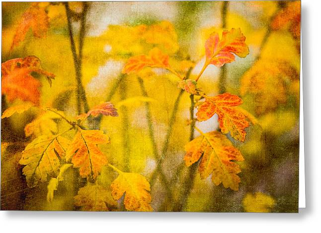 Biological Greeting Cards - Autumn In Yellow Greeting Card by Alexander Senin