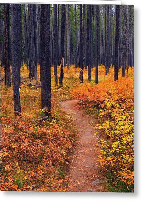 Autumn In Yellowstone Greeting Card by Raymond Salani III