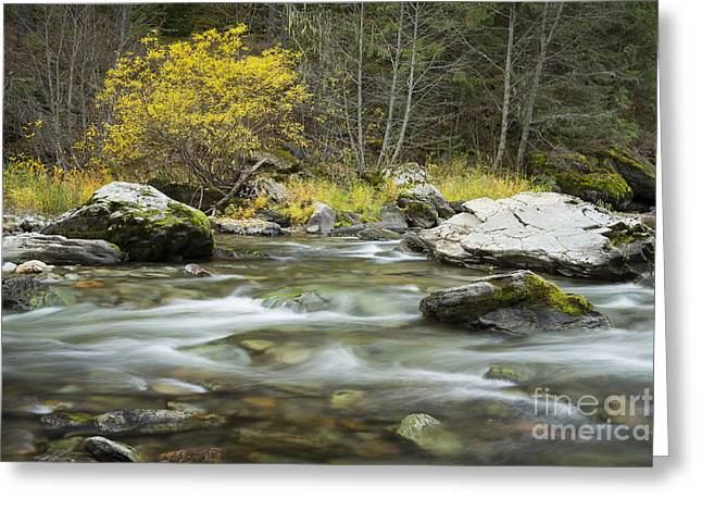North Idaho Greeting Cards - Autumn Joe Greeting Card by Idaho Scenic Images Linda Lantzy