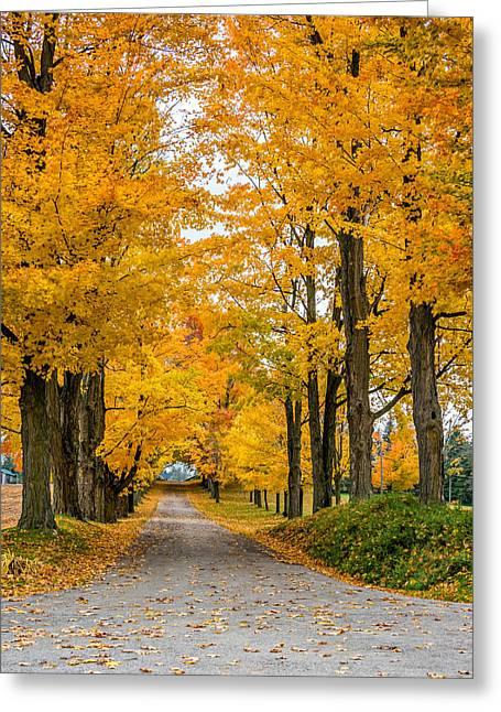 Fallen Leaf Greeting Cards - Autumn Journey 3 Greeting Card by Steve Harrington