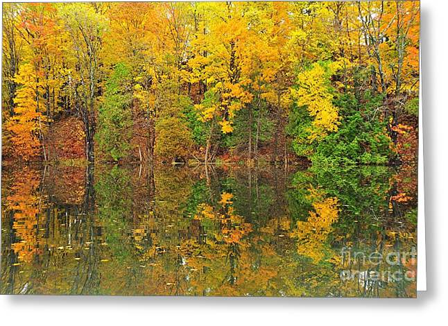 Fall Colors Greeting Cards - Autumn Kaleidoscope 10 Greeting Card by Terri Gostola