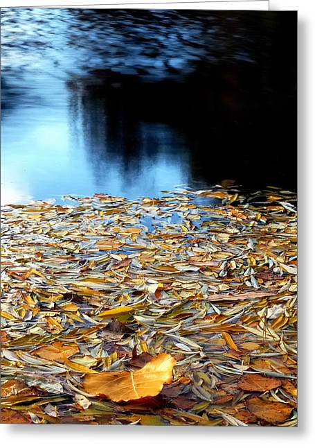 Autumn Lake Greeting Card by Steven Milner