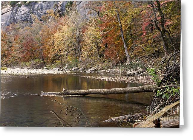 Arkansas Greeting Cards - Autumn Landscape at Steel Creek in Arkansas Greeting Card by Brandon Alms