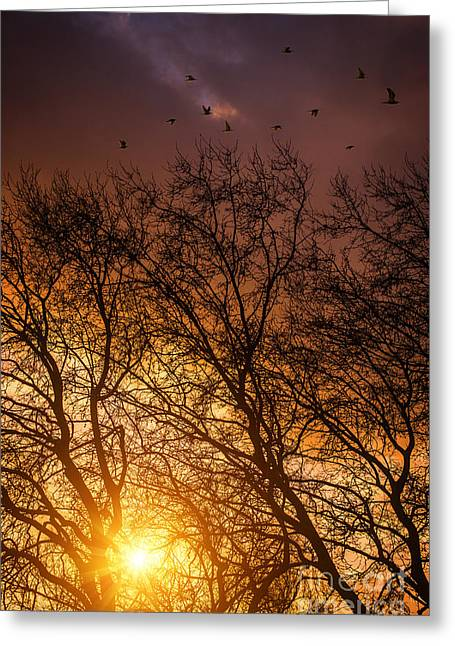 Beautiful Fall Sunset Greeting Cards - Autumn Landscape Greeting Card by Carlos Caetano