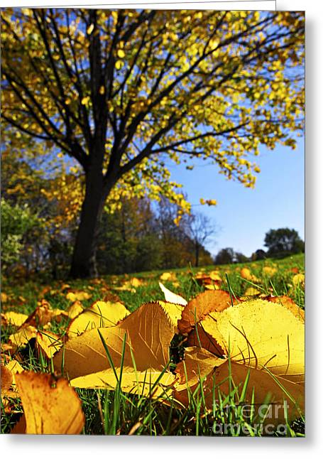 Autumn Greeting Cards - Autumn landscape Greeting Card by Elena Elisseeva