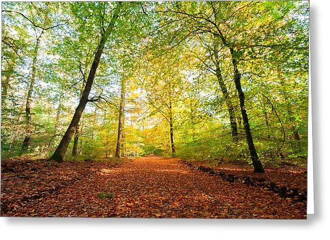 Alejandro Greeting Cards - Autumn Lane Greeting Card by Alejandro Quezada