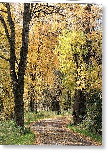 Wildlife Refuge. Greeting Cards - Autumn Lane Greeting Card by Angie Vogel