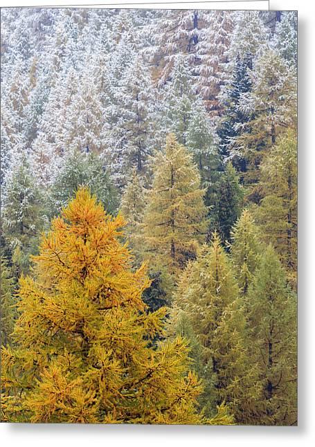 Autumn Larch Forest, Alps Switzerland Greeting Card by Heike Odermatt