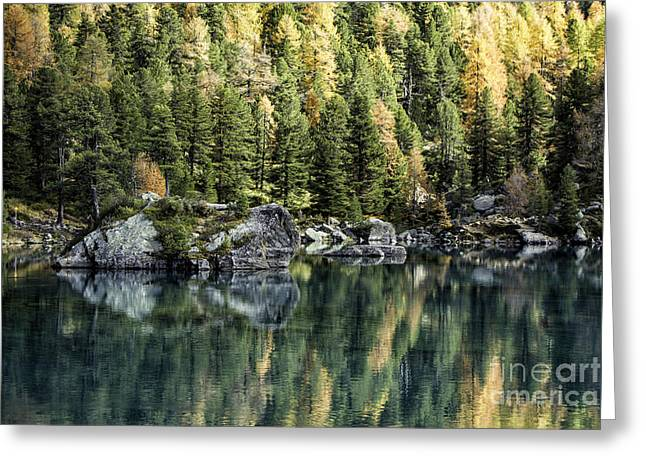 Pontresina Greeting Cards - Autumn Larch Pines 1 Greeting Card by Timothy Hacker