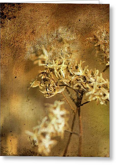 Photos Of Autumn Mixed Media Greeting Cards - Autumn Greeting Card by Laura Marie Jones