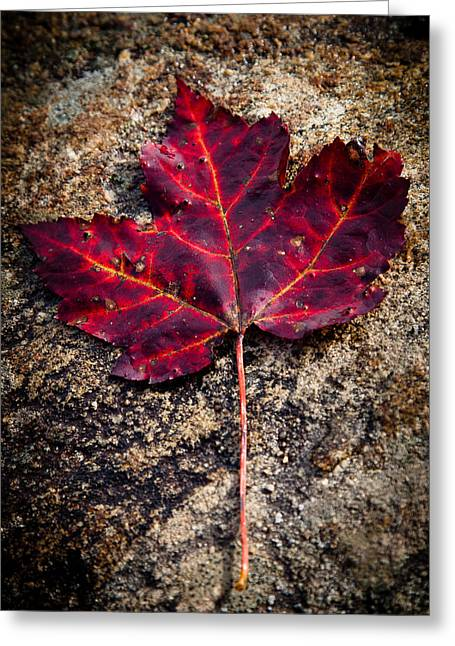 Surreal Landscape Greeting Cards - Autumn Leaf Greeting Card by David Patterson