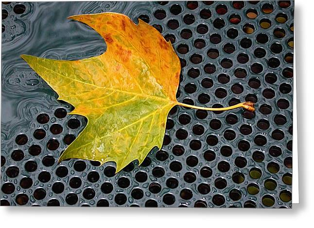 Autumn Leaf On Drain In Bryant Park Greeting Card by Gary Slawsky