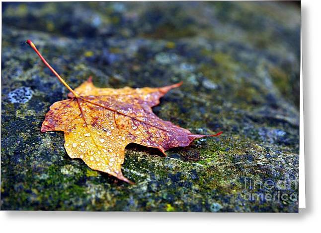 Fall Trees Greeting Cards - Autumn Leaf on Rocky Ledge Greeting Card by Terri Gostola