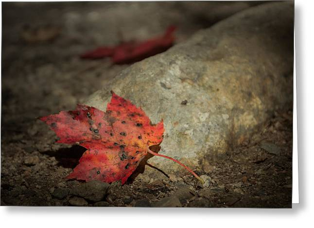 Ground Greeting Cards - Autumn leaf project Greeting Card by Chris Fletcher
