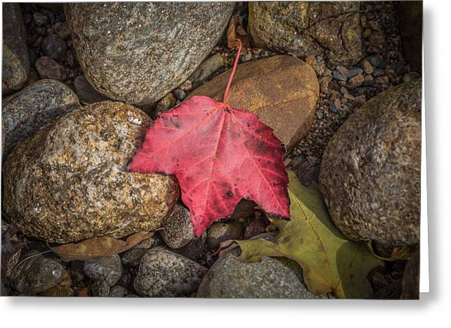 White River Greeting Cards - Autumn leaf project Greeting Card by Chris Fletcher