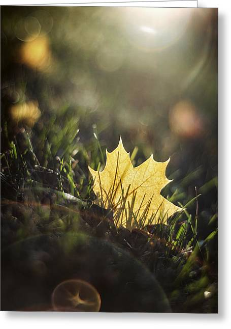 Glare Greeting Cards - Autumn Leaf Sunset Greeting Card by Scott Norris
