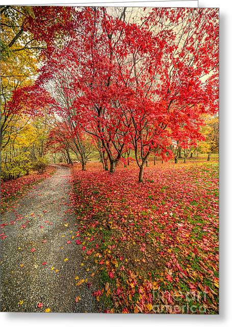 Acer Greeting Cards - Autumn Leaves Greeting Card by Adrian Evans