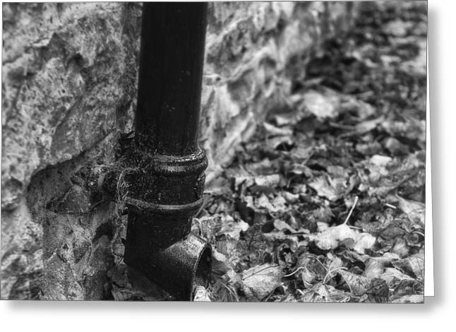 Soaked Greeting Cards - Autumn Leaves and Drain Pipe Greeting Card by Ian Barber