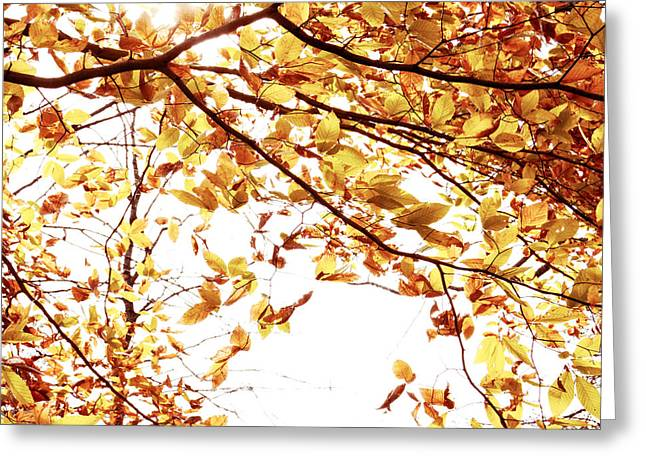 Fall Colors Greeting Cards - Autumn Leaves Greeting Card by Blink Images