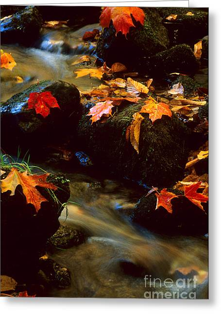 Nova Scotia Photographers Greeting Cards - Autumn Leaves Greeting Card by Bob Christopher