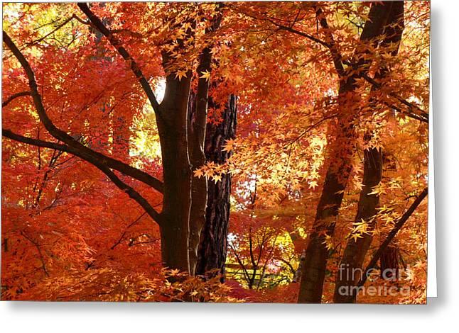 Spokane Greeting Cards - Autumn Leaves Greeting Card by Carol Groenen