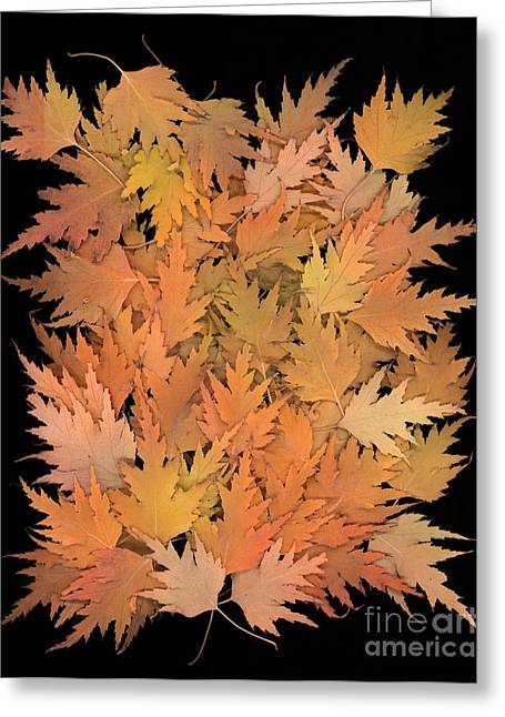 Vertical Greeting Cards - Autumn Leaves Greeting Card by Cindy Singleton