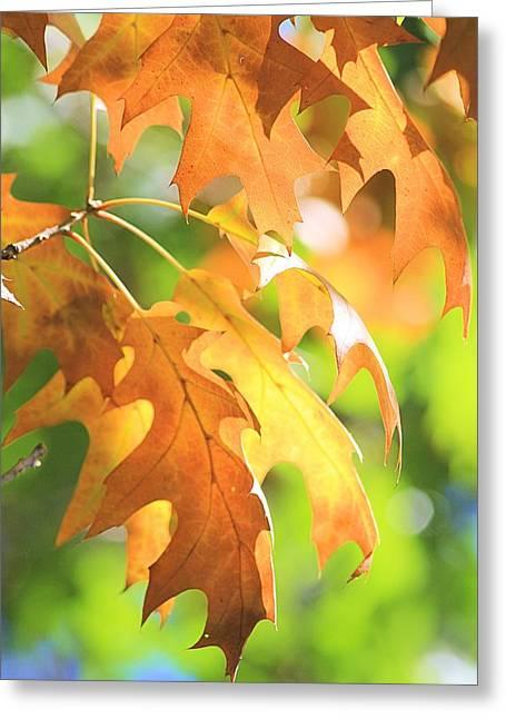 Elizabeth Budd Greeting Cards - Autumn Leaves Greeting Card by Elizabeth Budd