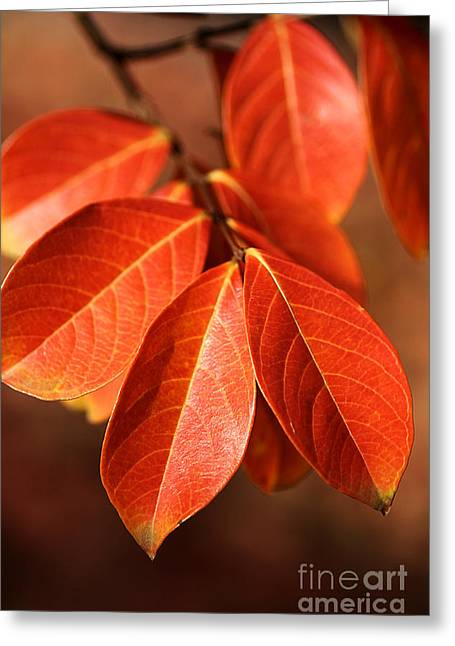 Autumn Leaves Greeting Card by Joy Watson