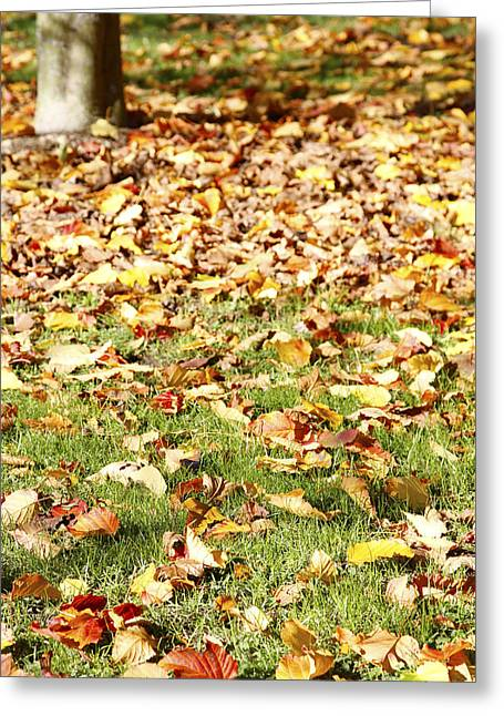 Fall Grass Greeting Cards - Autumn leaves Greeting Card by Les Cunliffe