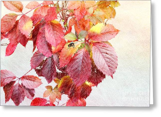 Crosshatching Greeting Cards - Autumn Leaves Greeting Card by Liane Wright