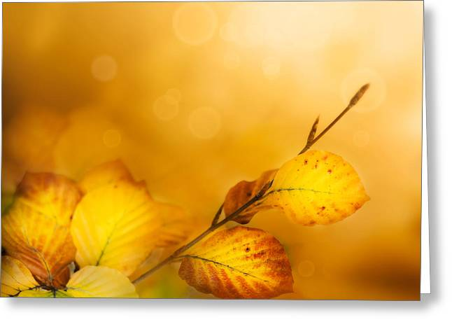 Autumn Leaves Greeting Card by Mythja  Photography