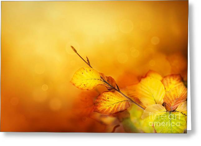 Mythja Greeting Cards - Autumn leaves Greeting Card by Mythja  Photography