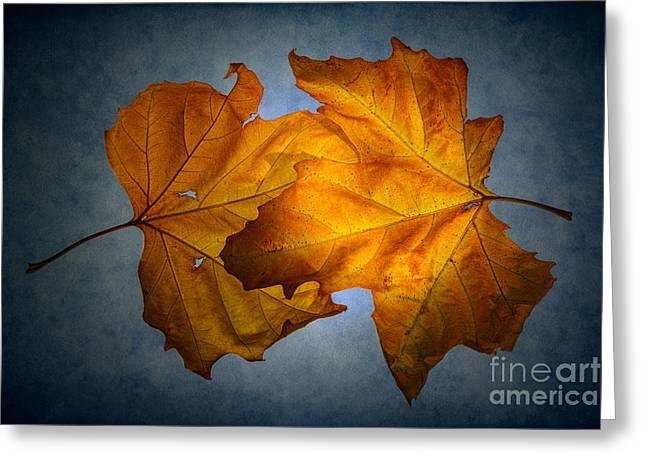 Autumn Leaves On Blue Greeting Card by Ann Garrett