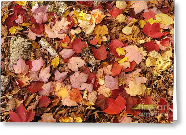 Forest Floor Greeting Cards - Autumn Leaves On Forest Floor Greeting Card by Gregory G. Dimijian