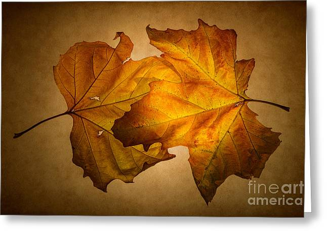 Autumn Leaves On Gold Greeting Card by Ann Garrett