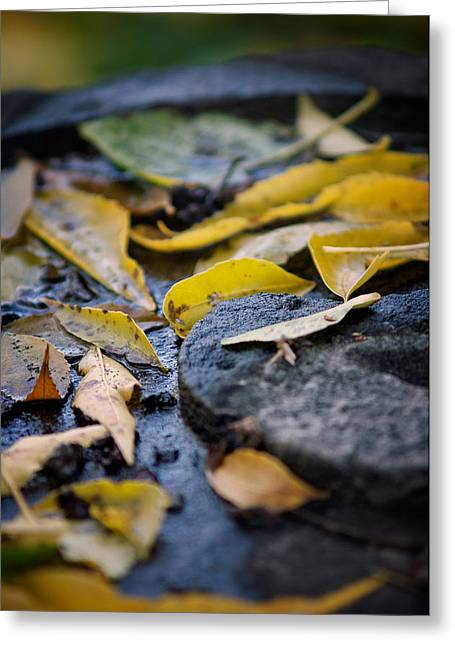 Fallen Leaf Greeting Cards - Autumn Leaves on Stone Greeting Card by Chris Bordeleau